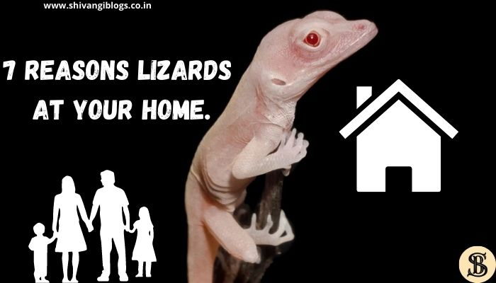 reasons-why-lizards-at-your-home