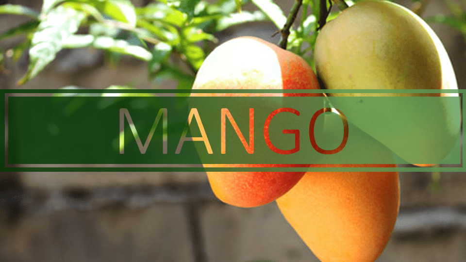 mangoes-are-useful-for-coronary-illness