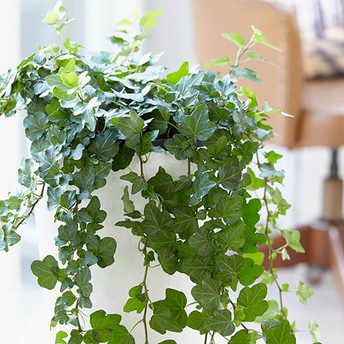 top-plants-to-grow-at-home-easily