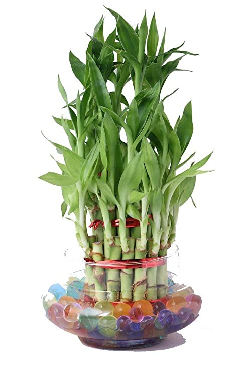 plants-to-grow-easily-at-home