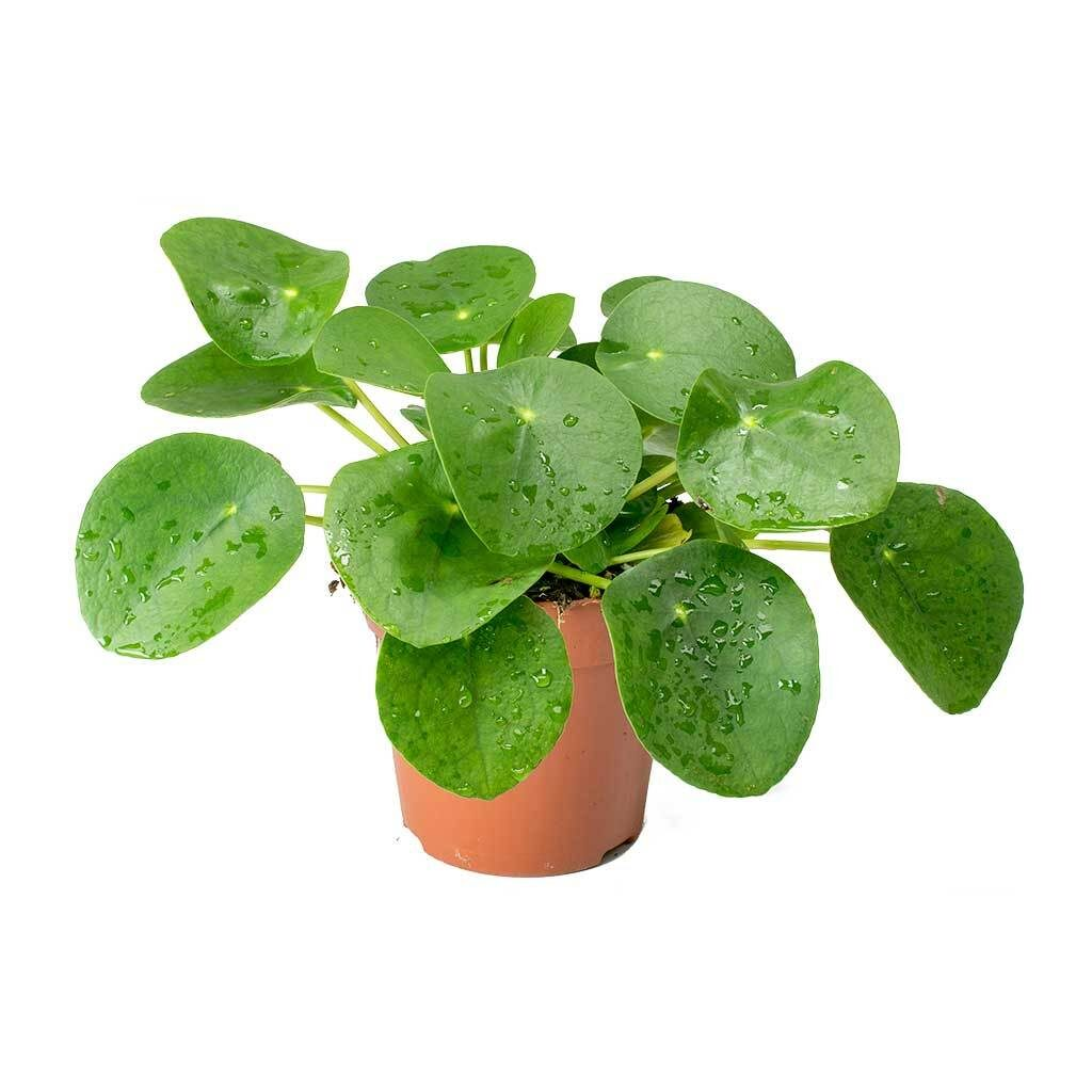 top-easy-plants-to-grow-at-home