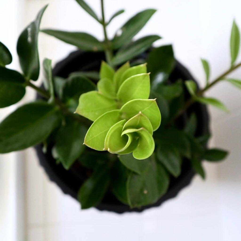 small-leaves-easy-plants-to-grow-at-home